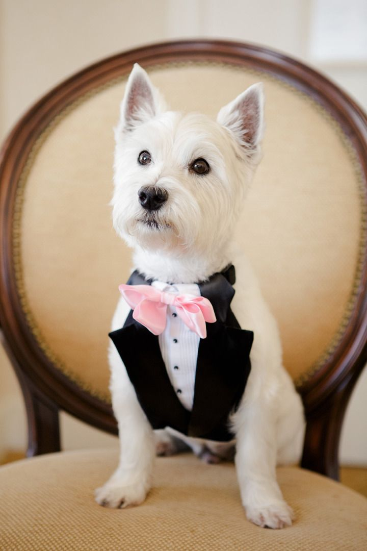 21 Adorable Wedding Pets to Make You Say \