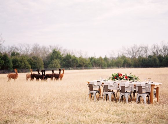 texas-wedding-19-072015mc